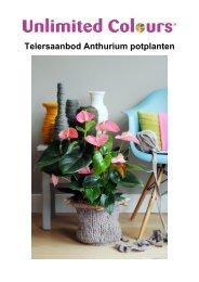 Telersaanbod Anthurium potplanten - Anthura