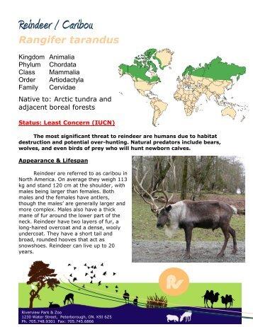 Reindeer / Caribou - Peterborough Utilities