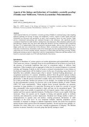 Aspects of the biology and behaviour of Candalides ... - Calodema