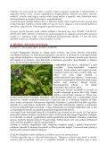 Vezetőfüzet letöltése - Duna-Dráva Nemzeti Park - Page 7