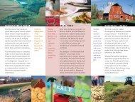 MNProject Brochure - The Minnesota Project