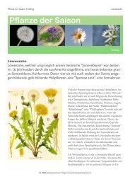 Ganzen Text als PDF-Dokument herunterladen ... - kraeuterwissen.ch