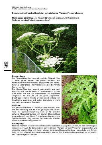 Dokumentation invasive Neophyten (gebietsfremde ... - Kanton Bern