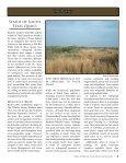 The Bobwhite Post - Caesar Kleberg Wildlife Research Institute ... - Page 3
