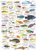 deutscher fischindex rotes meer - Fun Dive Club - Page 6