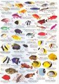 deutscher fischindex rotes meer - Fun Dive Club - Page 7