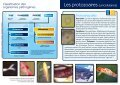 Microscope (Aquatic Science) - L'Oasis - Page 3