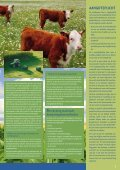 Mestgazet 6 - Bemestingsnormen 2008 - Vlaamse Landmaatschappij - Page 3