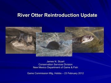 New mexican wildlife of concern new mexico game and for New mexico fish and game