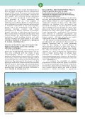 DIVISION OF GENETICS AND PLANT BREEDING - Page 6