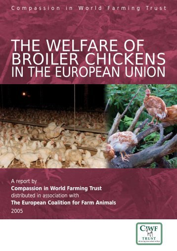 the welfare of broiler chickens - Compassion in World Farming