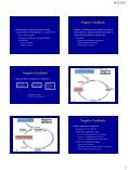 Homeostasis PowerPoint presentation - Page 2
