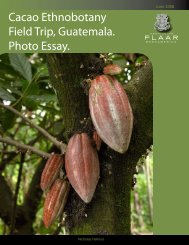 Cacao Ethnobotany Field Trip, Guatemala ... - Wide-format-printers.org