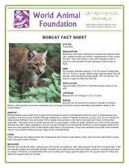 BOBCAT FACT SHEET - World Animal Foundation