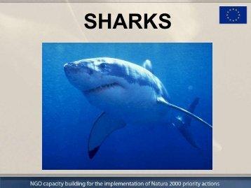 SHARKS - Plavi svijet