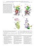 -antiplasmin 2 α X-ray crystal structure of the fibrinolysis inhibitor - Page 4