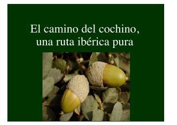 Animales cerdo iberico .pdf - Wikiblues.net