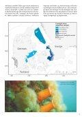 HAVETS NATUR - et oplæg til handleplan for Danmarks marine ... - Page 5