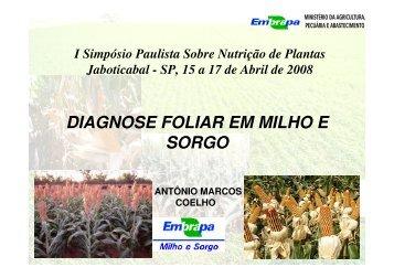 DIAGNOSE FOLIAR EM MILHO E SORGO - Nutricao de Plantas