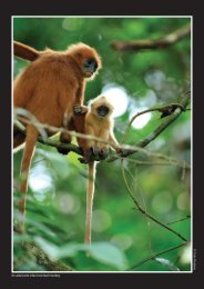 Cede Prudente An adult and infant red leaf monkey - Sabah Forestry ...
