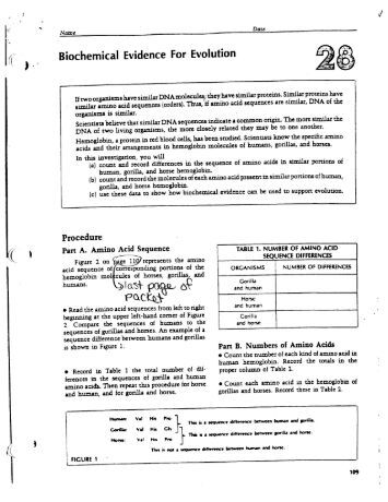 Printables Evidence For Evolution Worksheet biochemical evidence for evolution worksheet key intrepidpath 14 1 what causes sports injuries mrs gm biology 200