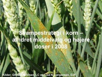Svampestrategi i korn – ændret middelvalg og højere doser i 2008