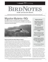 Migration Mysteries—FAQs - About Birds