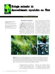 Biologia molecular do desenvolvimento reprodutivo ... - Biotecnologia