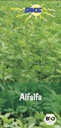 Weizengras, Gerstengras, Alfalfa