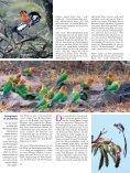 Viele Länder des östlichen Afrika sind heute touristisch gut erschlos ... - Page 5