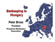 Beekeeping Beekeeping in Hungary - Apinews