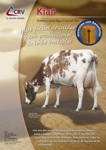KIAN, toro Holstein Rojo más vendido en el mundo
