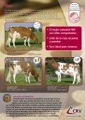 KIAN, toro Holstein Rojo más vendido en el mundo - Page 2