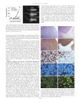 Inhibition of Fibroblast Growth Factor-2-induced Vascular Tumor ... - Page 4