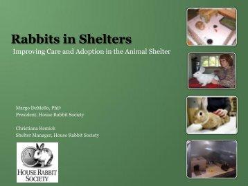 Rabbits in Shelters - House Rabbit Society