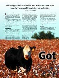 Got Cotton? - Angus Journal