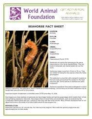SEAHORSE FACT SHEET - World Animal Foundation