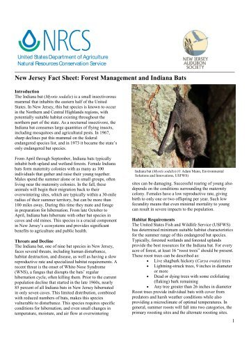 Forest Management and Indiana Bats - New Jersey Audubon Society
