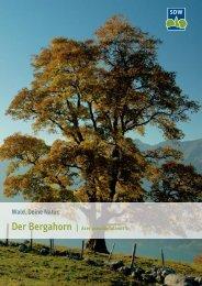 3015537 SDW Bergahorn.indd - Schutzgemeinschaft Deutscher Wald