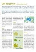 3015537 SDW Bergahorn.indd - Schutzgemeinschaft Deutscher Wald - Page 2