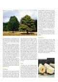 3015537 SDW Bergahorn.indd - Schutzgemeinschaft Deutscher Wald - Page 3