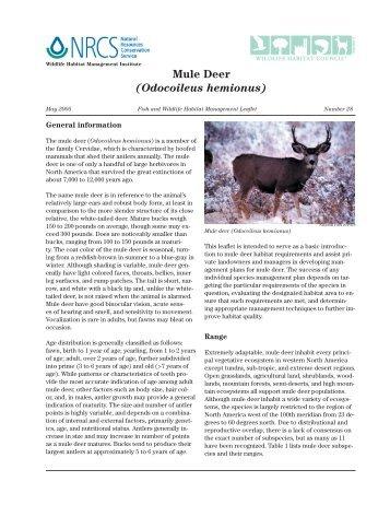Mule deer.indd - Wildlife Habitat Council