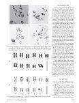 Chromosome Karyotypes of Echinacea angustifolia ... - HortScience - Page 2