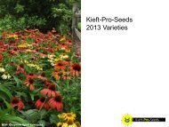 Kieft-Pro-Seeds 2013 Varieties