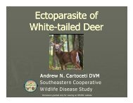 Ectoparasite of p White-tailed Deer tailed Deer