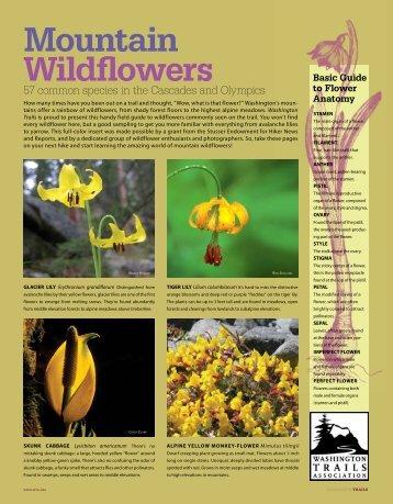 WT-06-08-WILDFLOWERS