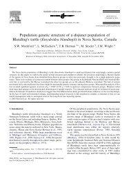 Emydoidea blandingii - Species at Risk