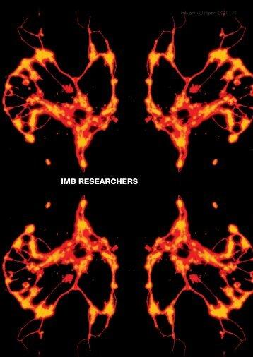 imb researchers - Institute for Molecular Bioscience - University of ...
