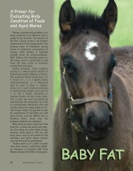 Evaluating Body Condition of Foals and Aged Mares - Kentucky ...