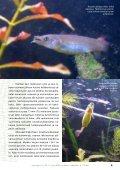Aponogeton cf. AW 2/2008 - Aqua-Web - Page 4